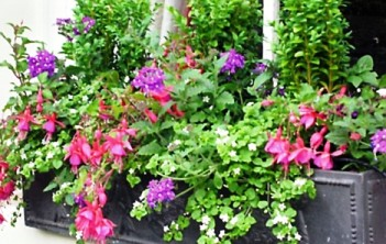 Are Flower Boxes a Profitable Web Business Idea?